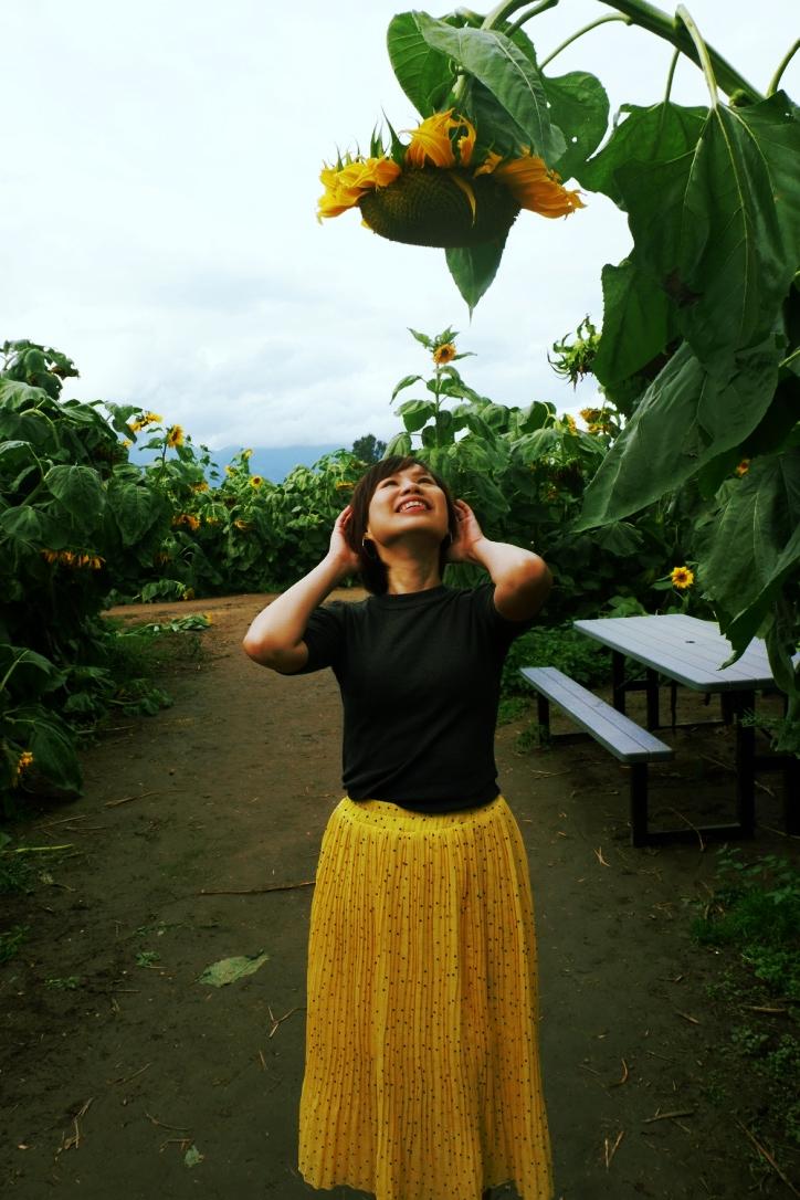 chilliwack events sunflower festival