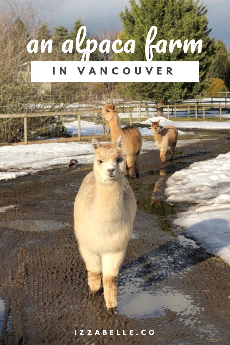 alpaca farm vancouver british columbia