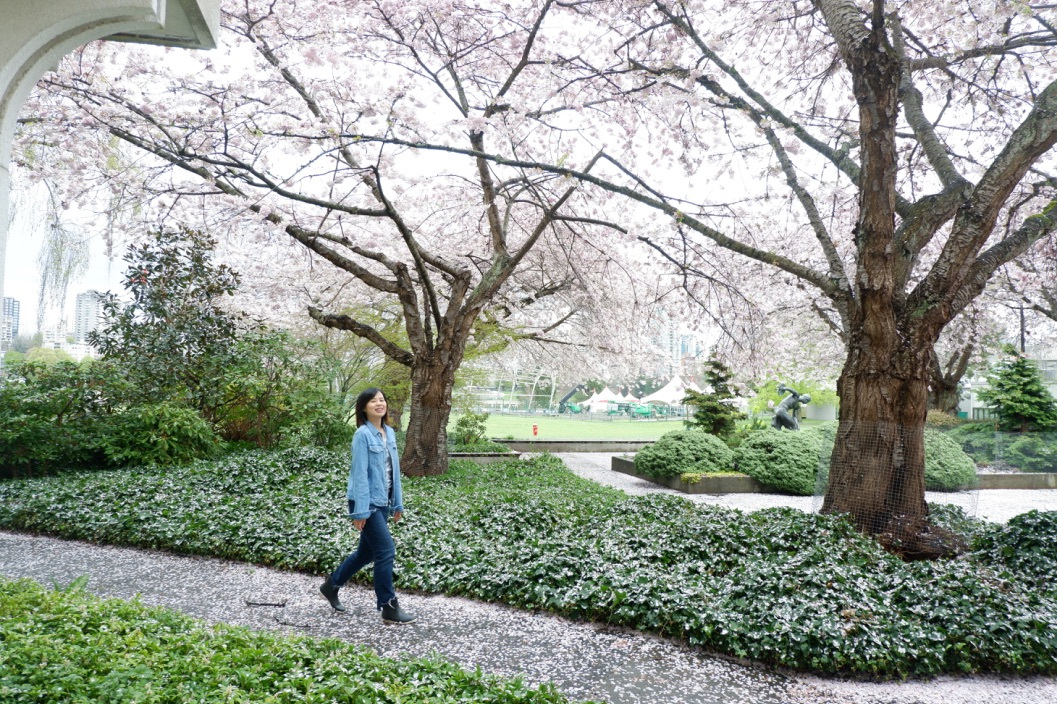 cherry+blossoms+vancouver+canada