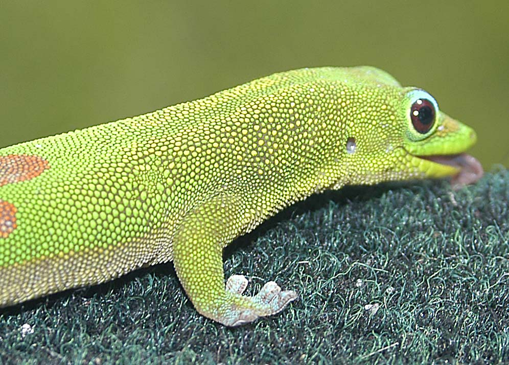 Lizard 5.JPG