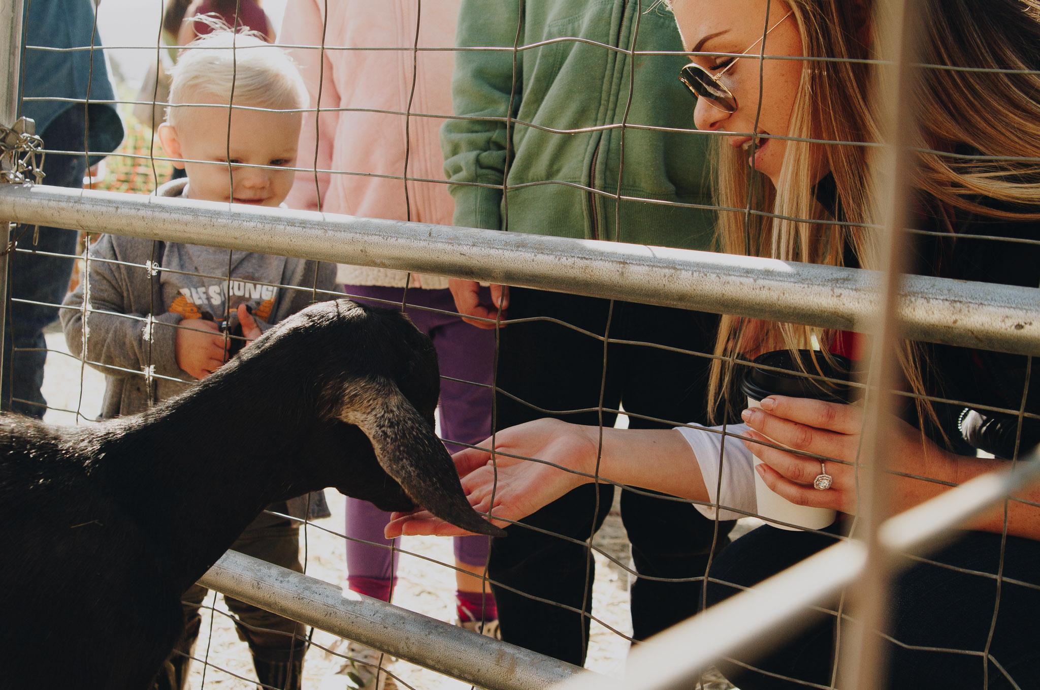 petting-zoos-medford-oregon