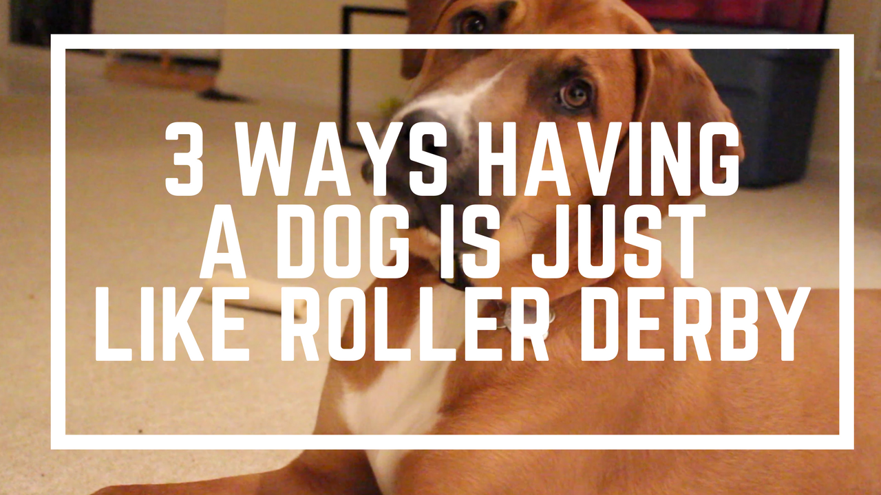 3 Ways Having a Dog is Like Derby | Roller Derby