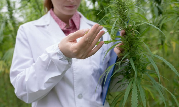 uconns-new-cannabis-course-brings-scientific-rigor-art-growing-featured (1).jpg