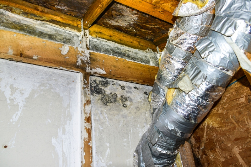 Mold growth in attic due to improper attic ventilation and poor duct insulation.