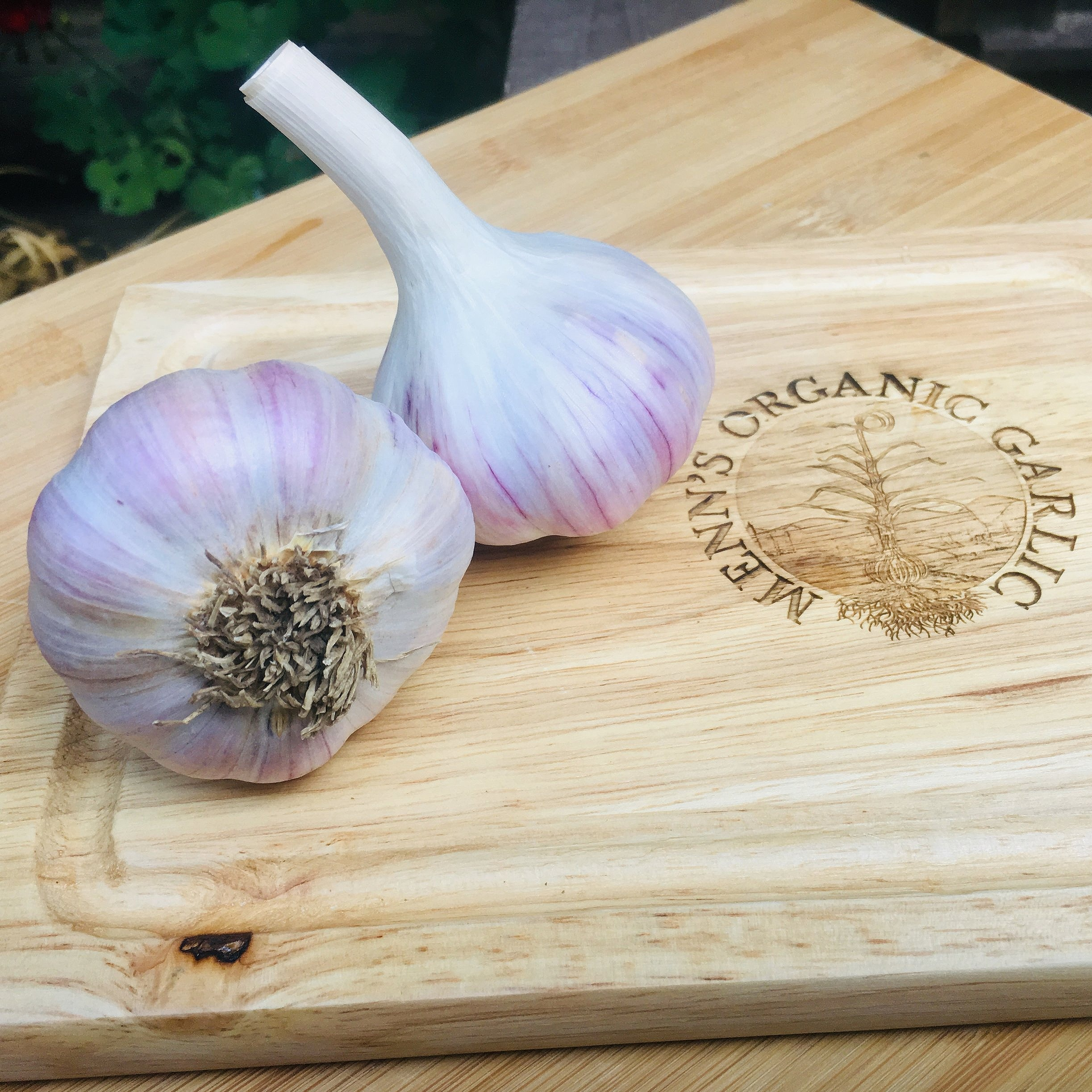Pehoski Purple (Sold out) - A large purple stripe hardneck that has a hot flavor raw, which becomes mild and earthy when cooked. A great all purpose garlic that can be used for roasting, baking and sauteing.