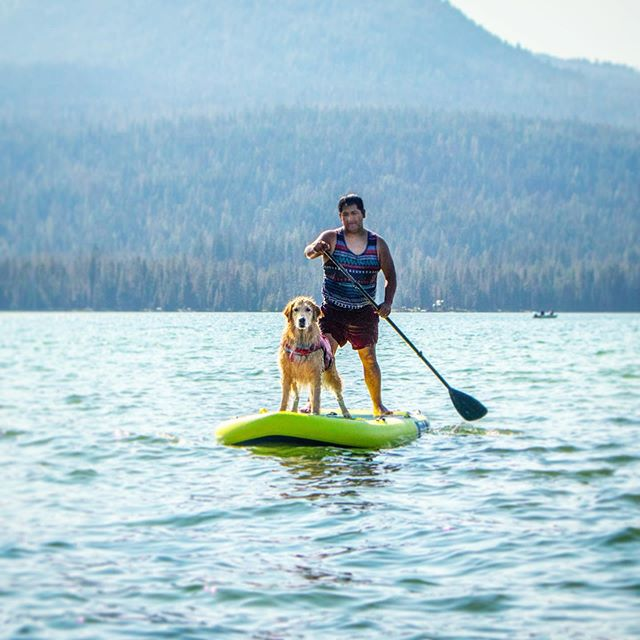 I helped dad train for his triathlon this Sunday 😆... I made sure he fell in the water as many times as possible so that he would get more swim time 😂🤦♂️🏊♂️ #dogtrainer . . . . . . . . . . #seattle #goldenretriever #goldenretrieverpuppy #dogpaddle #paddleboarding #dockdog #duckdog #washington #oregon #bendoregon #craterlake #diamondlake #adventuredog #traveldog #waterdog #dogdad #vandog #vanlife #doggypaddle #dogpaddle #wetdog #picoftheday #photooftheday #dogoftheday  #islesurfandsup #islepaddleboards #kurgotogether #islesup
