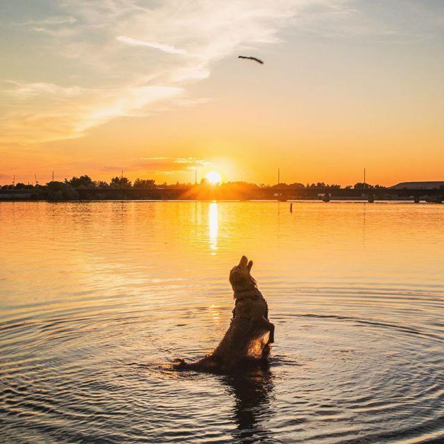 Eye on the prize 😍 #fetchfordays .... Happy Friday! It's going to be beautiful in Seattle this weekend... perfect for sunsets and swimming 🏊💦🐕💨. . . . . . . . . #goldenretriever #goldenretrieverpuppy #goldenretrieversofinstagram #goldenoftheday #dogs #dogsofinstagram #dogsofinsta #adventure #adventuredog #adventuredognation #travel #waterdog #wetdog #vanlife #vandog #travato #travatolife #travato59g #winnebagolife #rvlife #puppy #puppiesofinstagram #gunnsdoamerica #picoftheday #photooftheday #insta #adventureawaits #kurgotogether