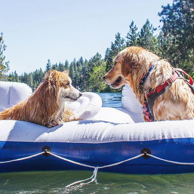 Who would you like to cool off with on a #hotsummer day? ...😍 missing  @sebastianthecorgi . . . . . . . .  Looks like we have an open seat for a new pup 😉. . . . . . . . . . . #goldenretriever #goldenretrieverpuppy #goldenretrieversofinstagram #goldenoftheday #dogs #dogsofinstagram #dogsofinsta #adventure #adventuredog #adventuredognation #travel #waterdog #wetdog #vanlife #vandog #travato #travatolife #travato59g #winnebagolife #rvlife #puppy #puppiesofinstagram #kurgotogether #picoftheday #photooftheday #insta #adventureawaits #corgi