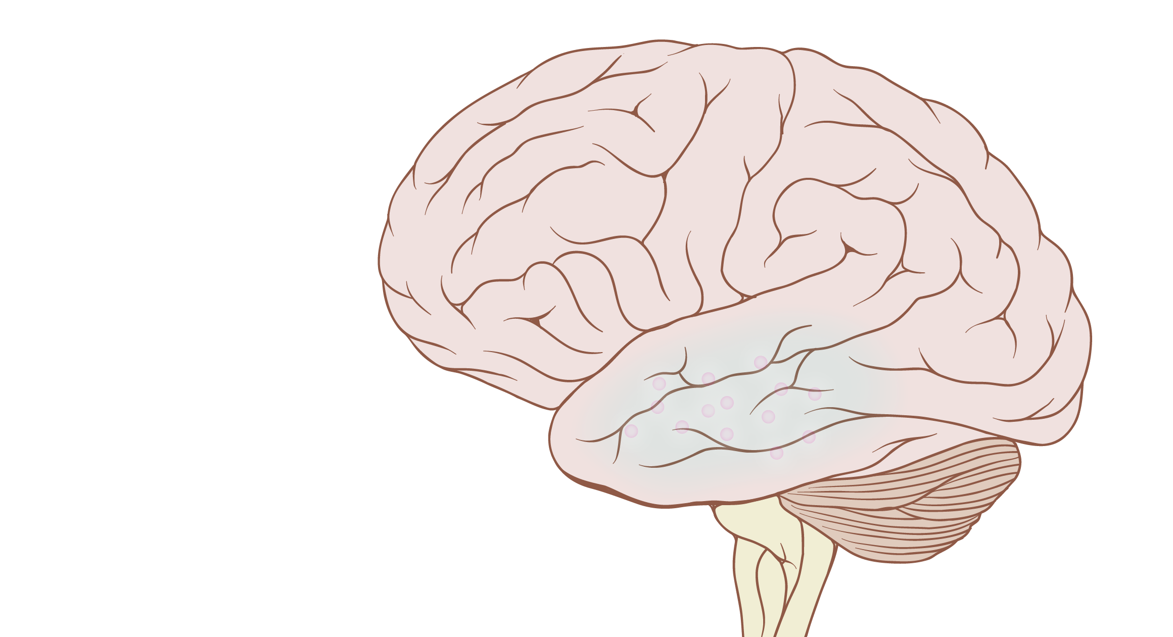 Neuroparticles™ Can Safely Disintegrate