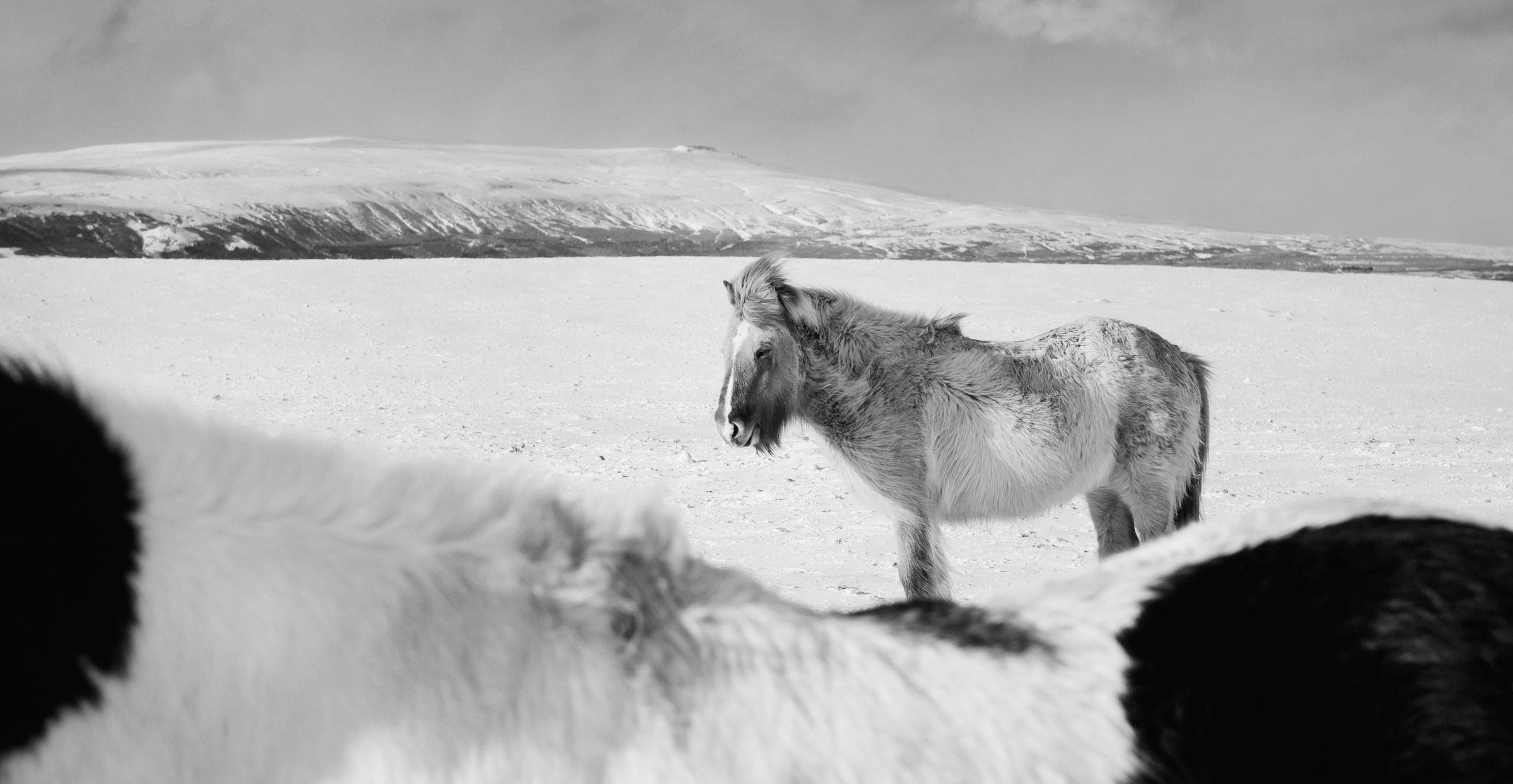 Voyage_Islande_Hiver_Anouk-Ruffieux_13.jpg