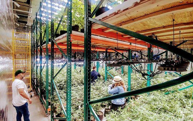 Double decker tier 3 all LED grow by @skyhighgardensseattle
