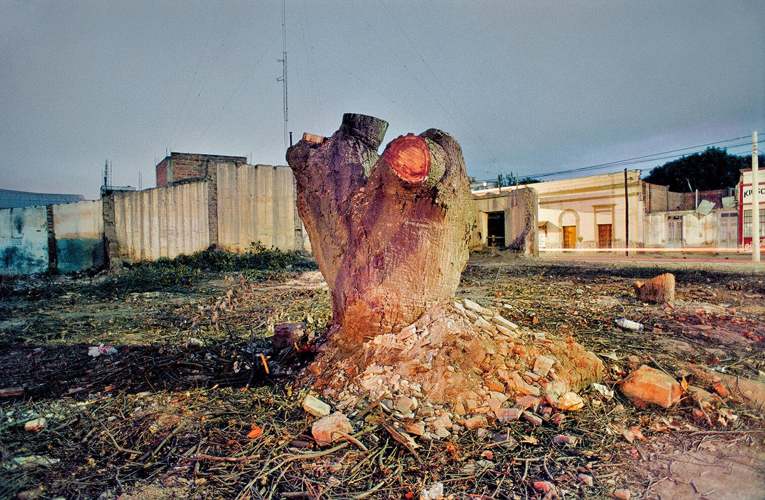 25 Arbol Cortado-A felled tree 2000 copia.jpg