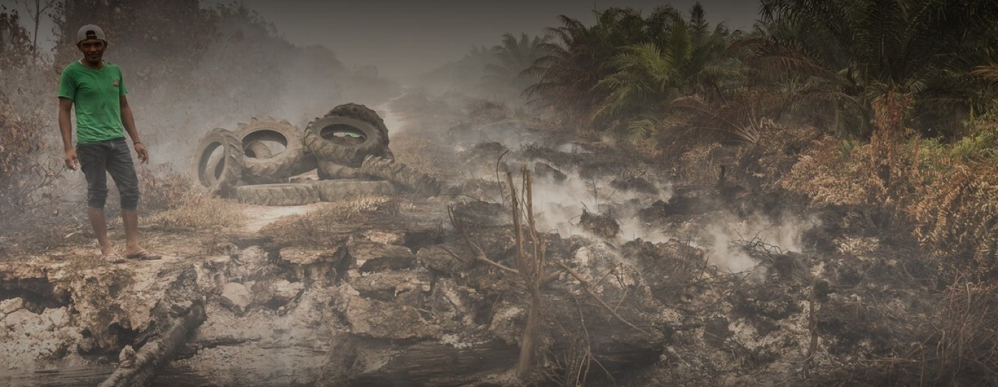 Clearcutting for palm oil production is devastating rainforests around the world