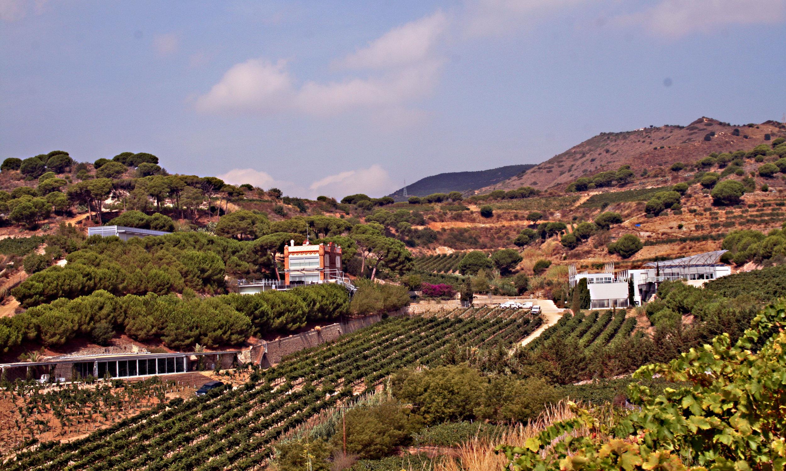 Vakker utsikt frå dei øverste vinmarkane hjå produsenten Alta Alella.