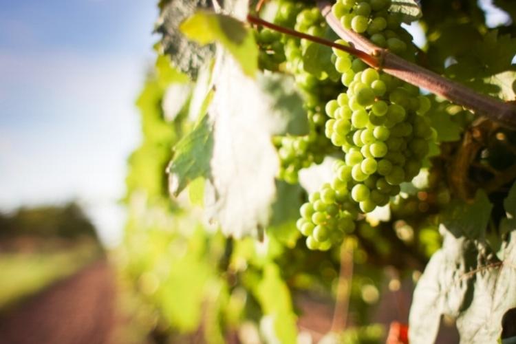 Vinbesøk Stag´s Leap.jpg
