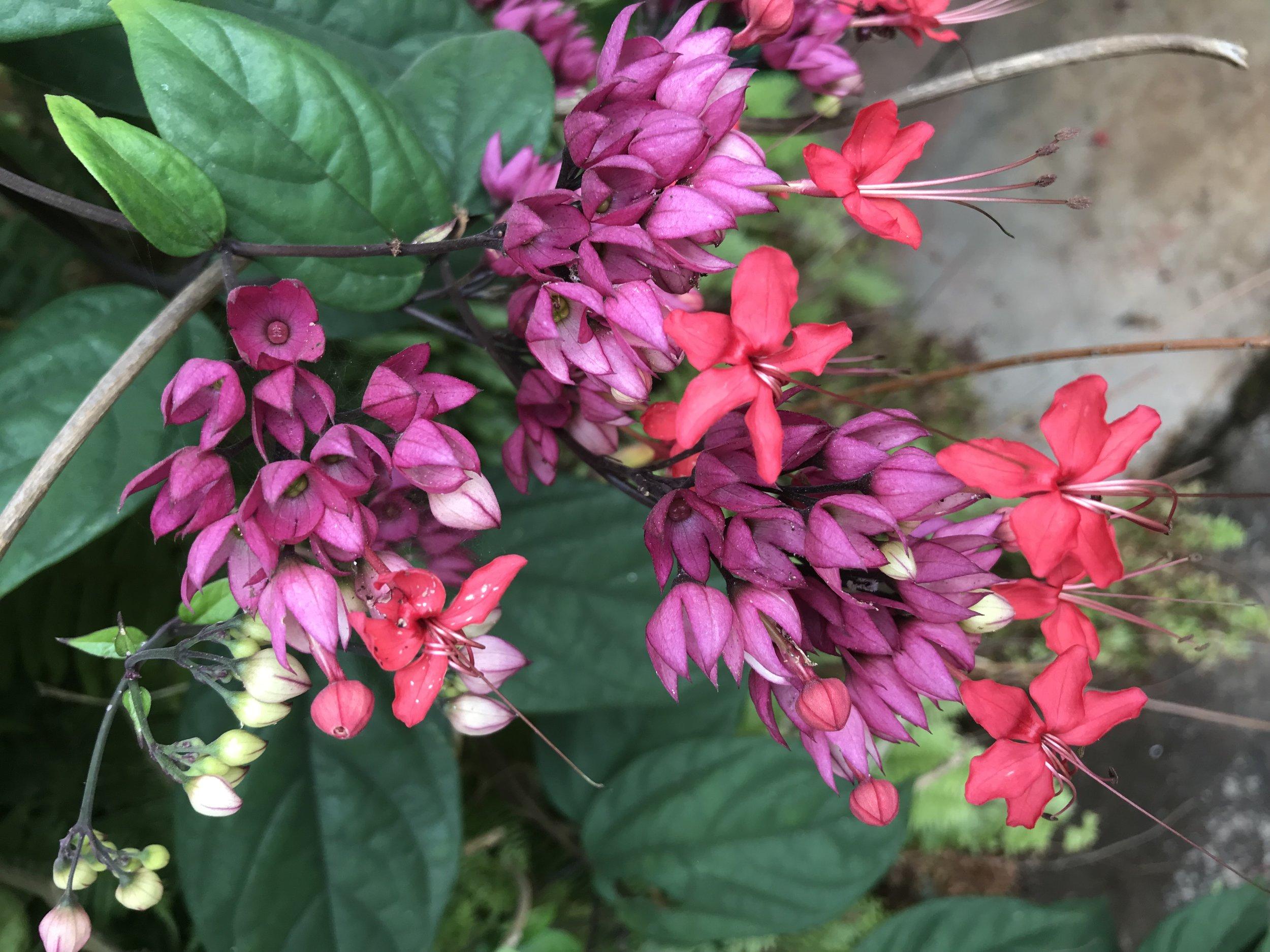 Rainforest flowers