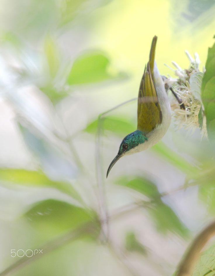 Photo from: https://i.pinimg.com/736x/68/44/c4/6844c45ccc8d20a0abc5e6bf7aa070c4--green-photos.jpg