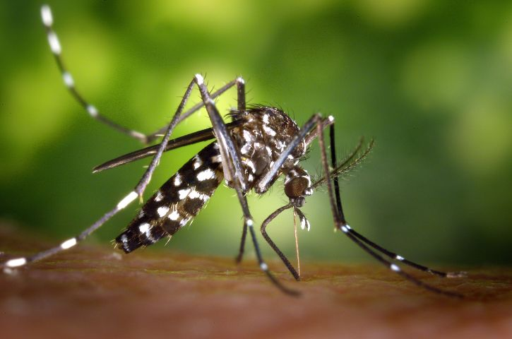 female-aedes-albopictus-mosquito-feeding-on-a-human-host-725x480.jpg