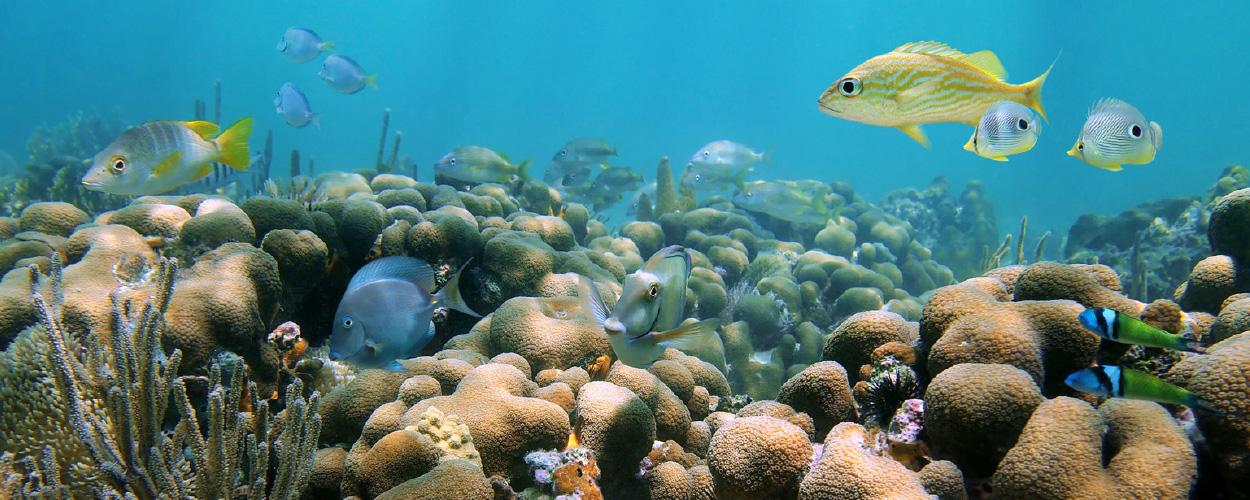 LADYJ-Cruise-Destination-Diving-Caribbean-Reef.jpg