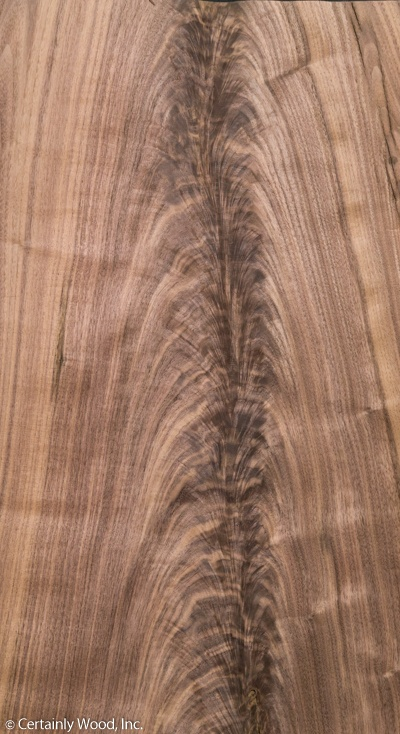 Walnut Crotch -