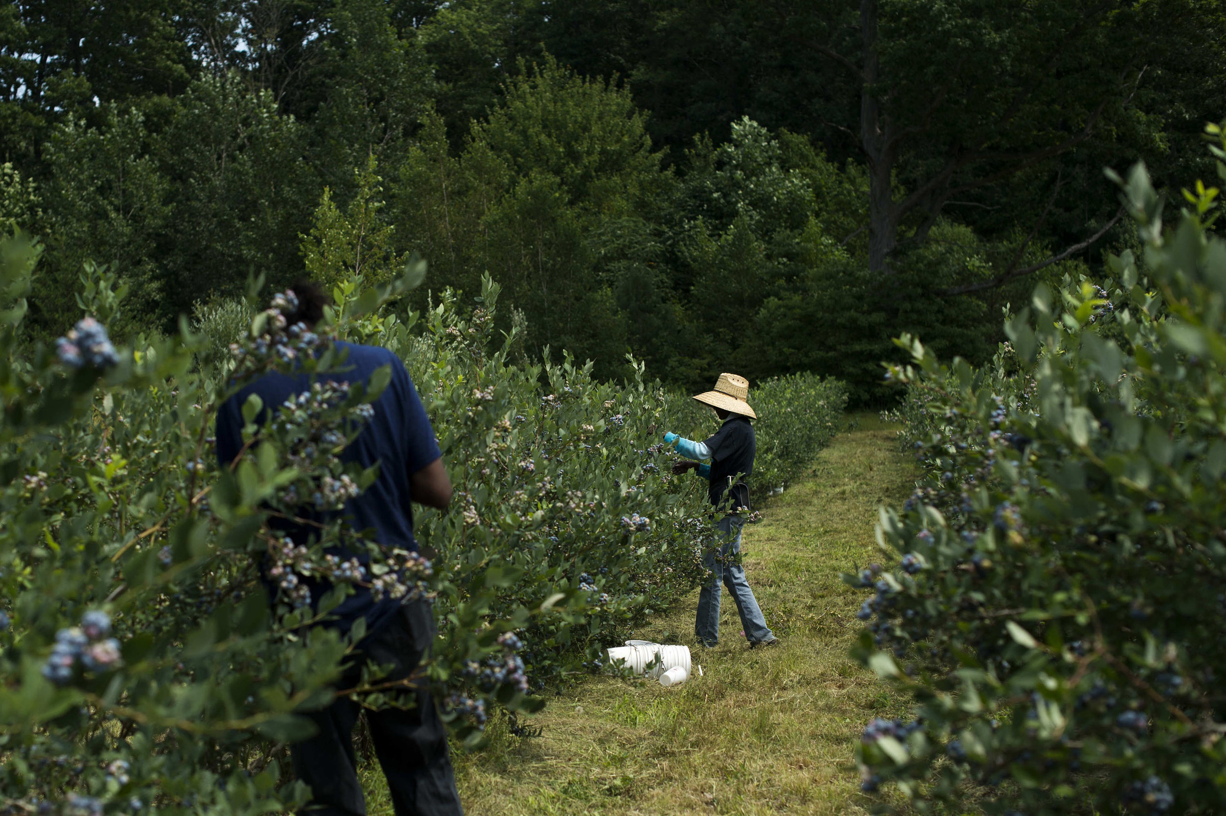 Blueberry Farms_059.jpg