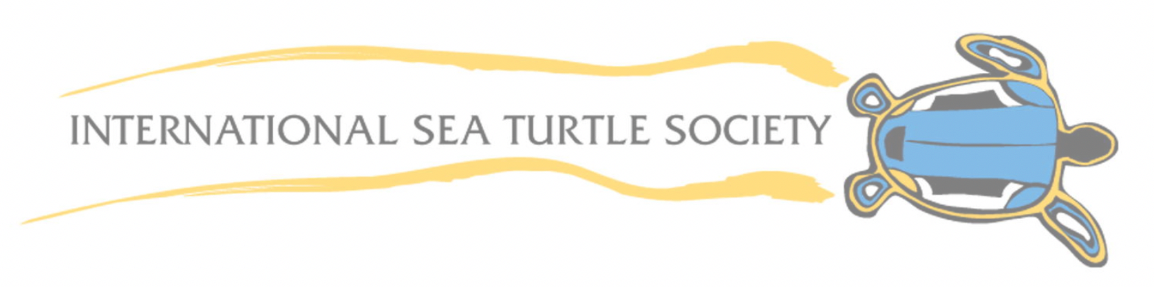 HV_sea_turtle.png