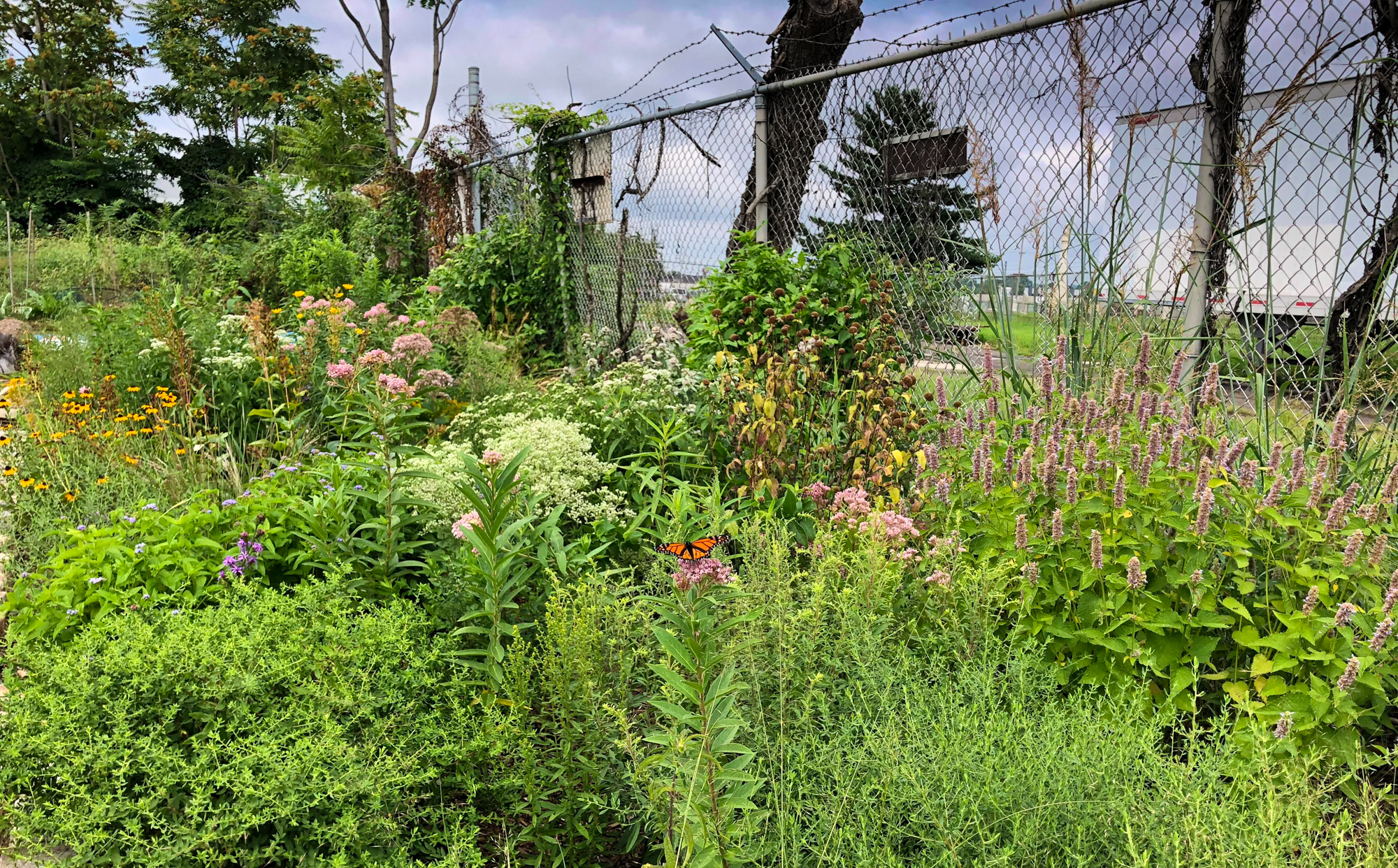 Demo garden/wildlife habitat at Good Host Plants in Philadelphia, PA (Photo: John Janick)