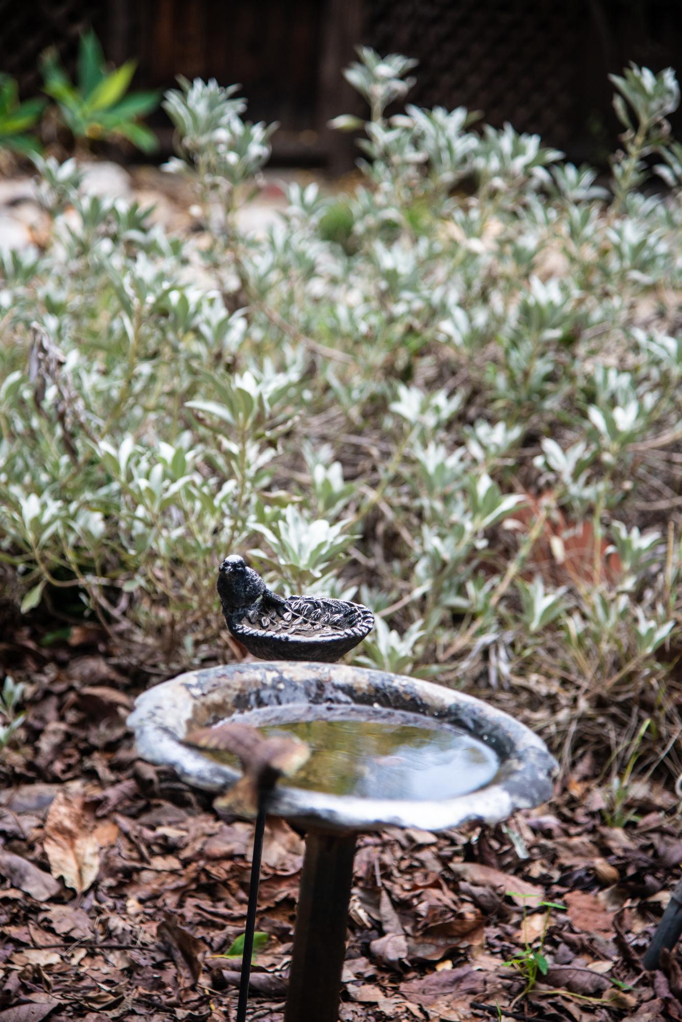 A few things that make a yard wild: Water, leaf litter, cover & pollinator-friendly plants  (Photo: David Newsom)
