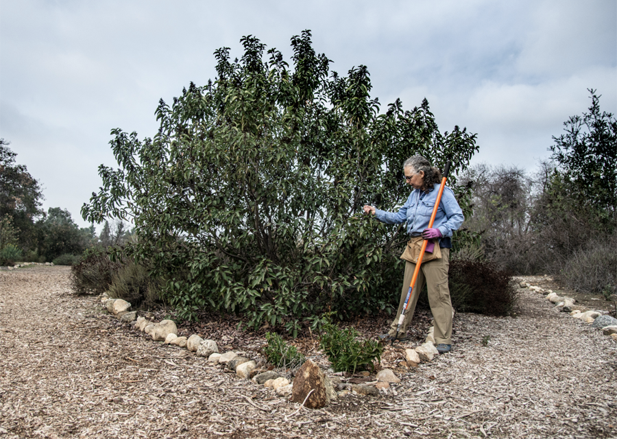 "An Interview with Barbara Eisenstein - ""I AM A GARDENER WHO LOVES CALIFORNIA NATIVE PLANTS AND WANTS TO SHARE MY EXPERIENCE SO THAT I WILL SEE THEM USED MORE IN OTHER URBAN GARDENS."""