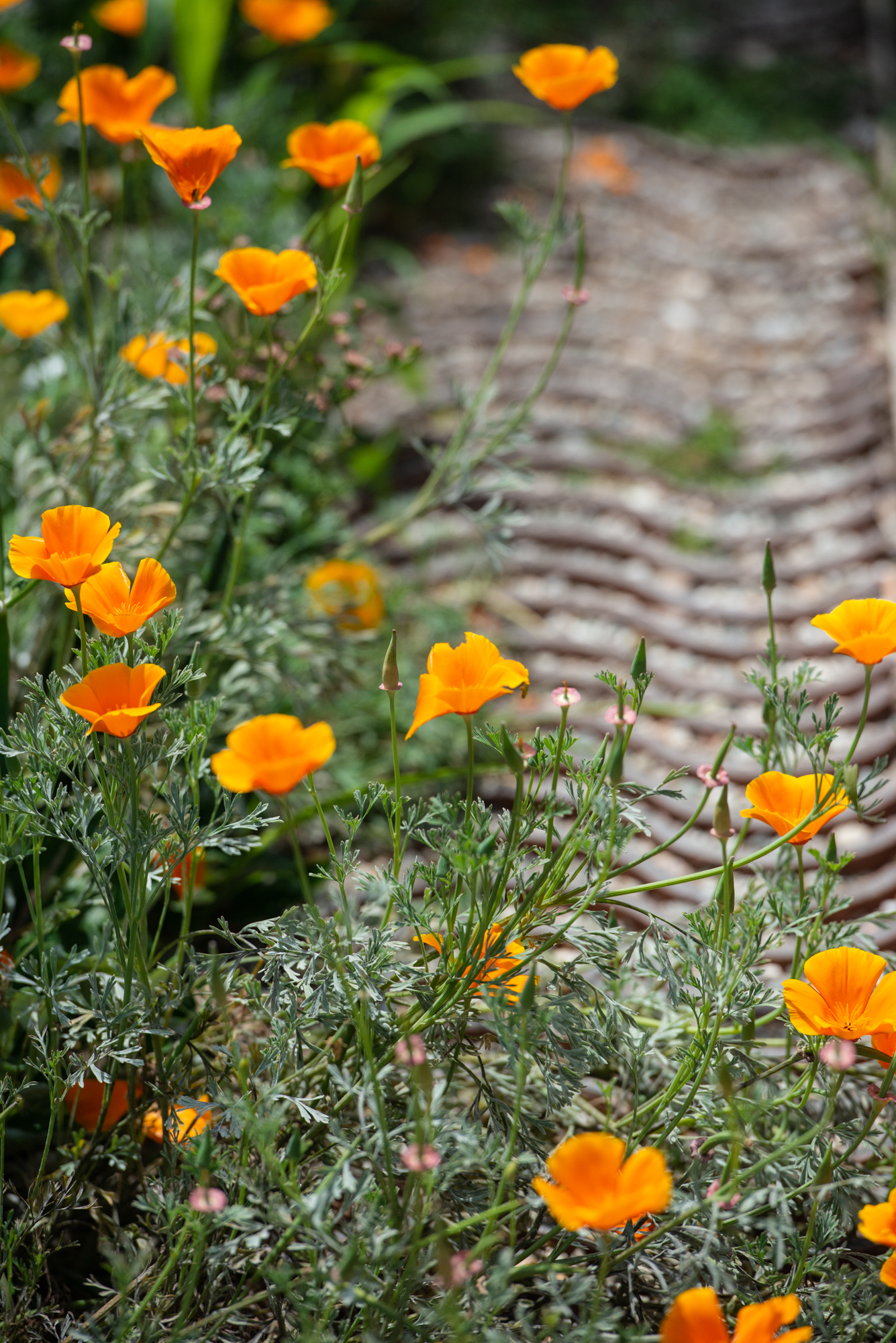 Poppies line a walkway of terra-cotta inlay