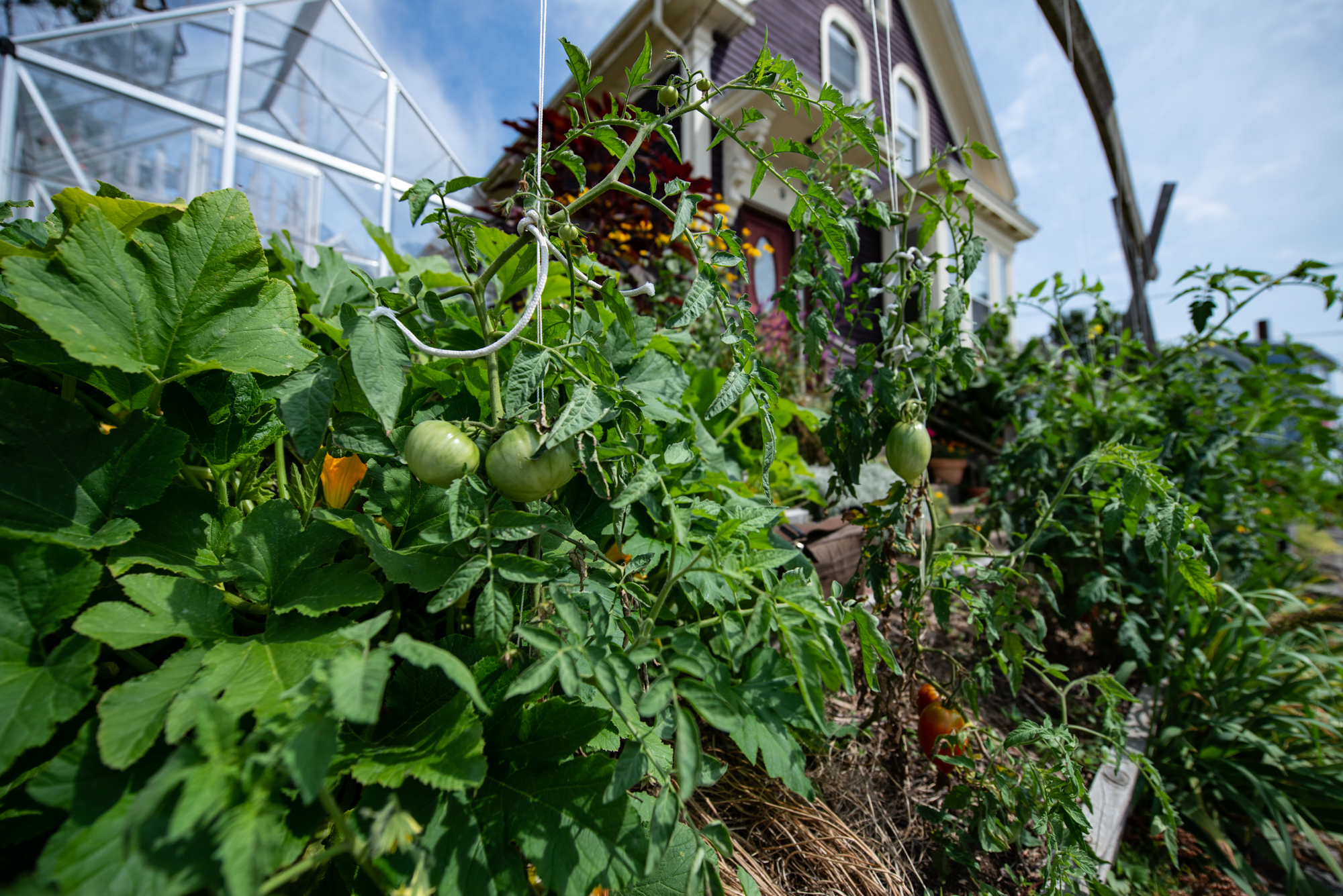 Curb Appeal- The Pedestrian Picking Zone of the family garden (Photo: David Newsom)
