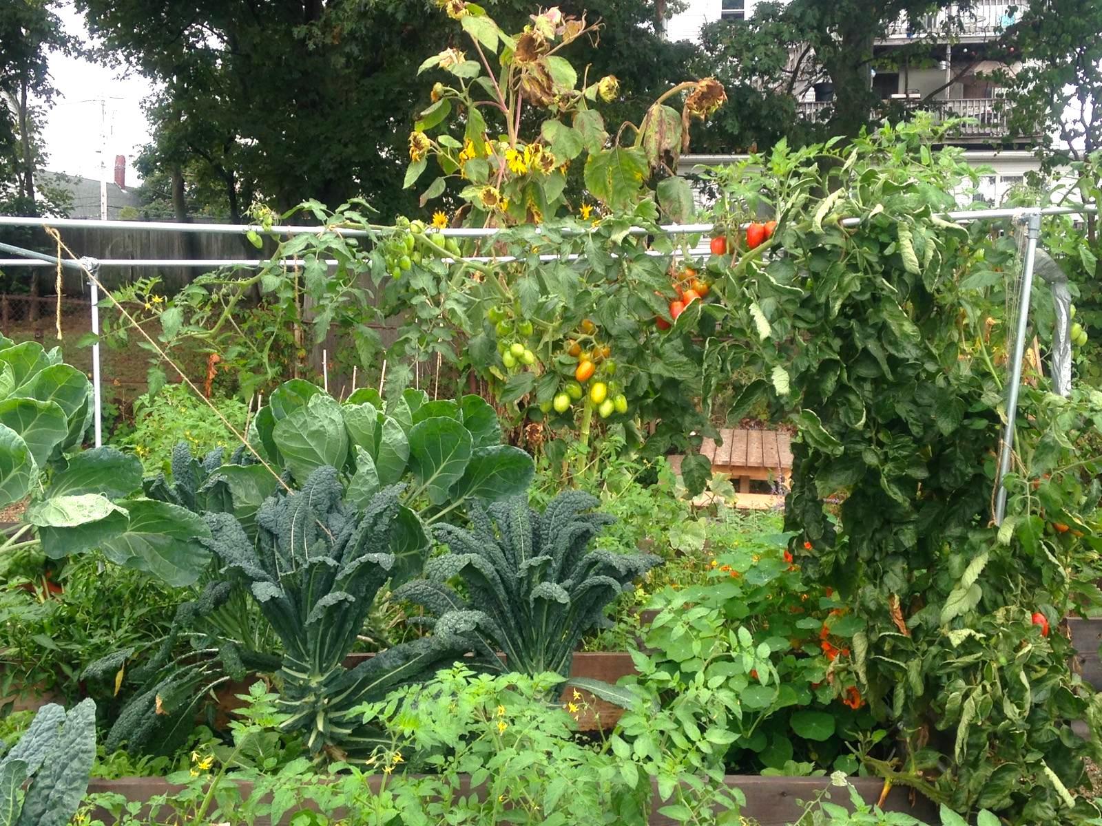 A Community Garden, Courtesy of BYG (Photo: BYG)