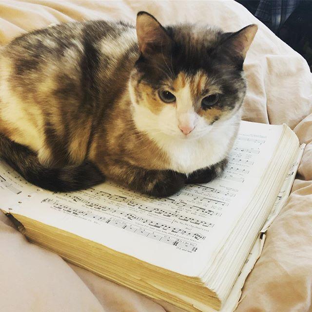 Kugel is hitting the stacks!! She's preparing for her audition with @ukulele_orchestra_nyc . Good luck, Kugel! 🍀  #ukelele #uketilyoupuke #uonyc