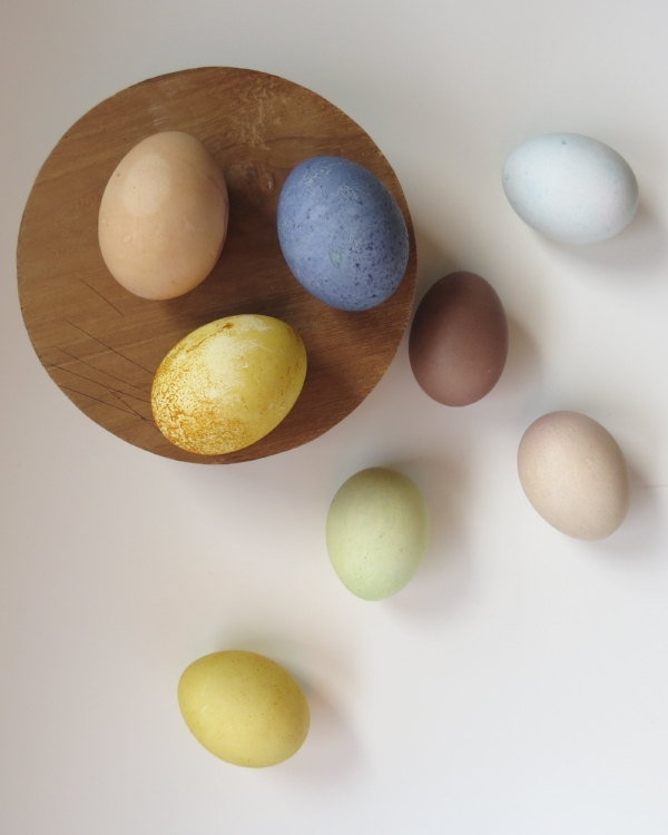 natural, pastel dyed easter eggs, chemical free at Foraged Home