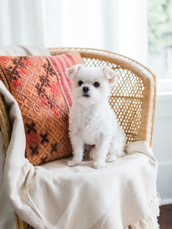 Cute little white dog for Foraged Home Look book