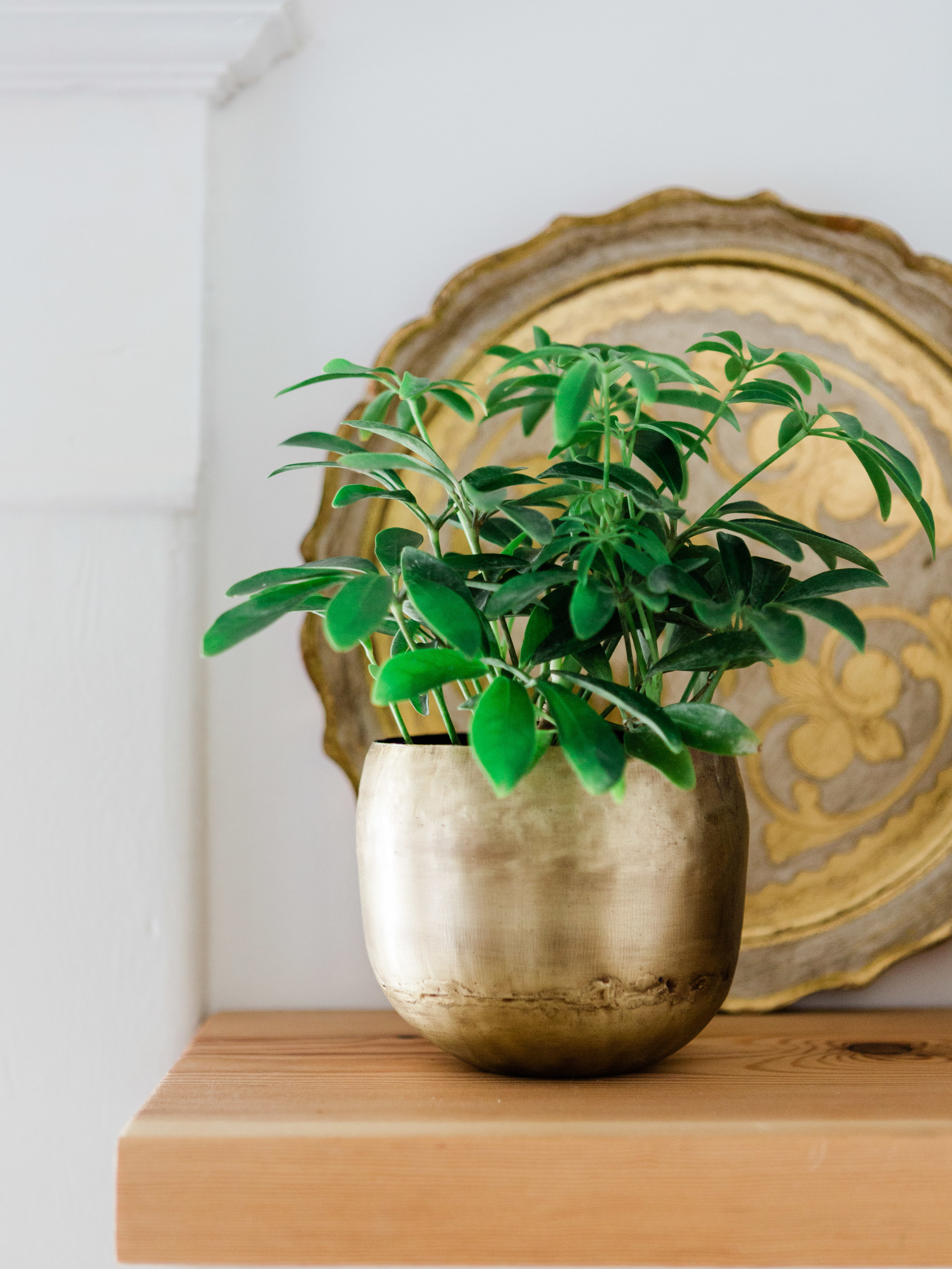 Simple brass indoor planter from Foraged Home