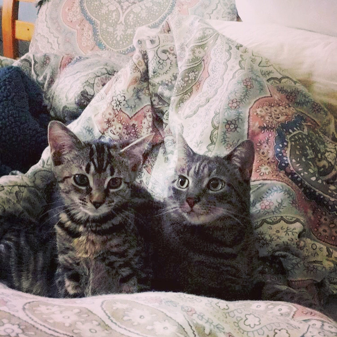 Resident cats, Charlie and Earl