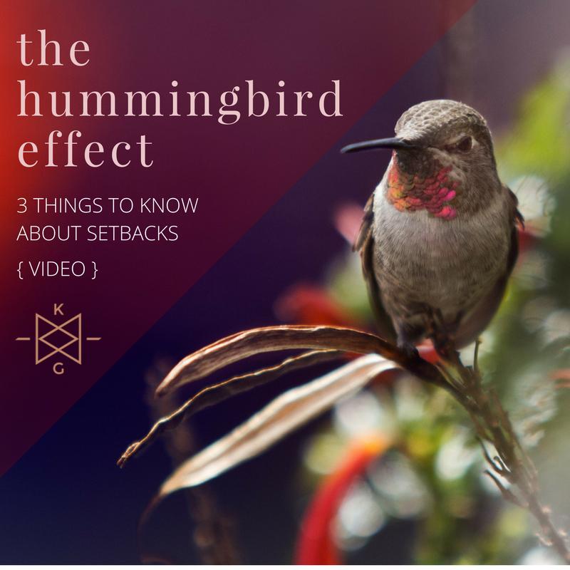 the hummingbird effect_ video