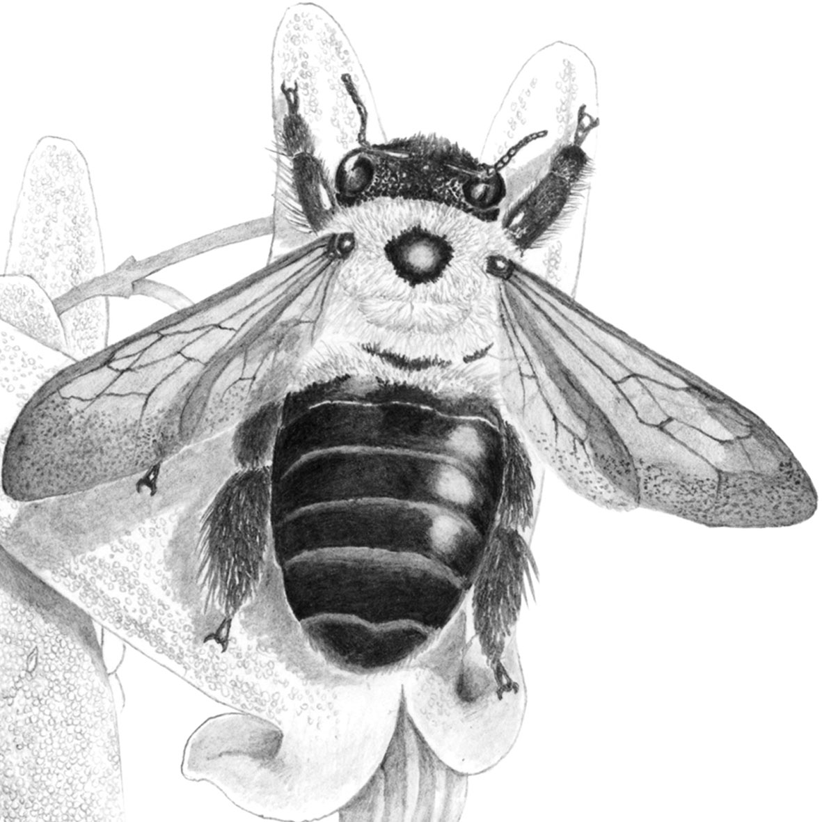 Canadian bees.jpg