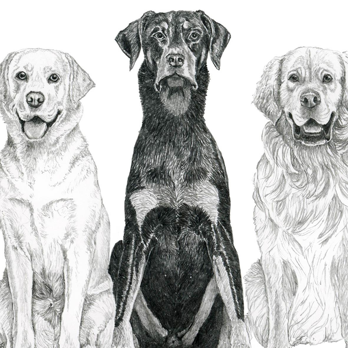 canine ocd.jpg