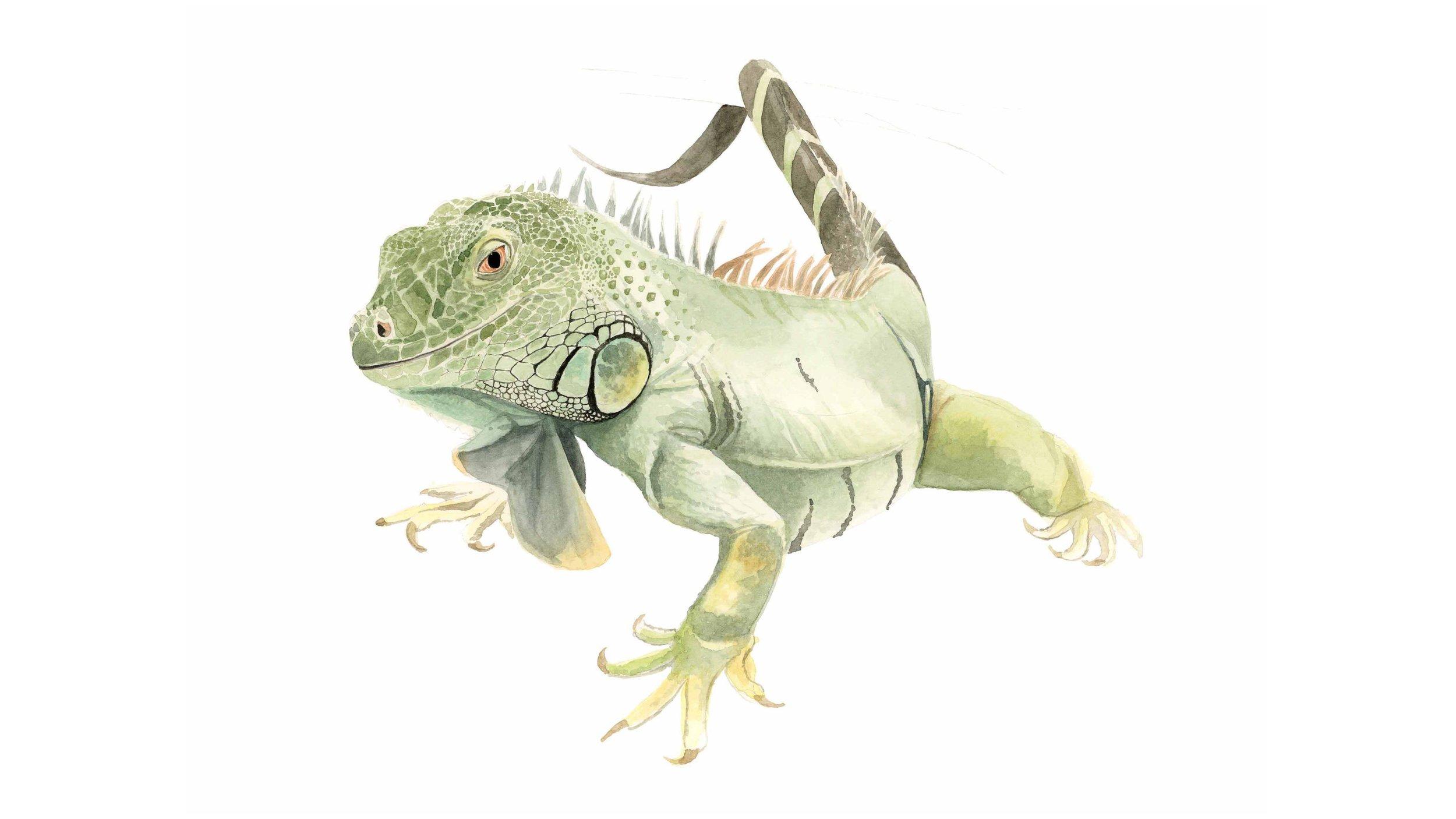 Dino-slideshow.jpg