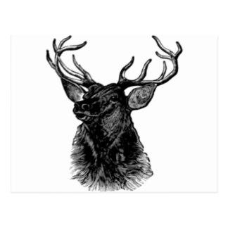 Elk Head.jpg