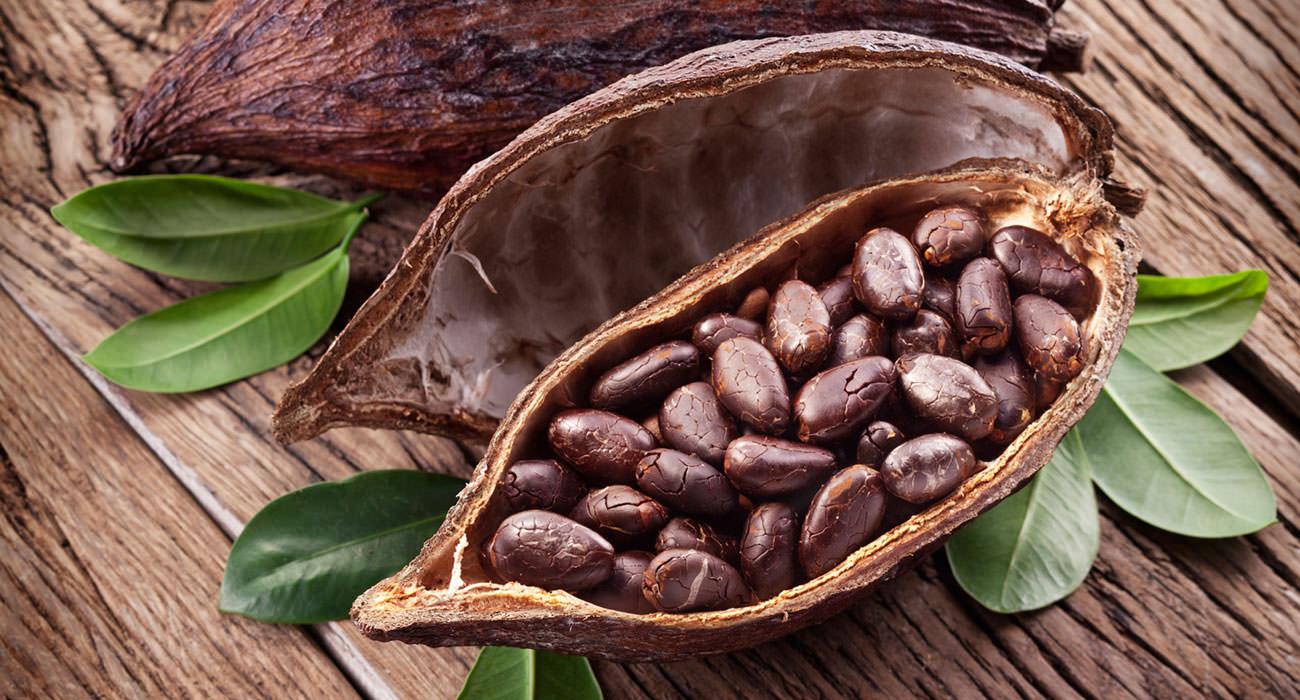 natural chocolate cocoa beans in a pod