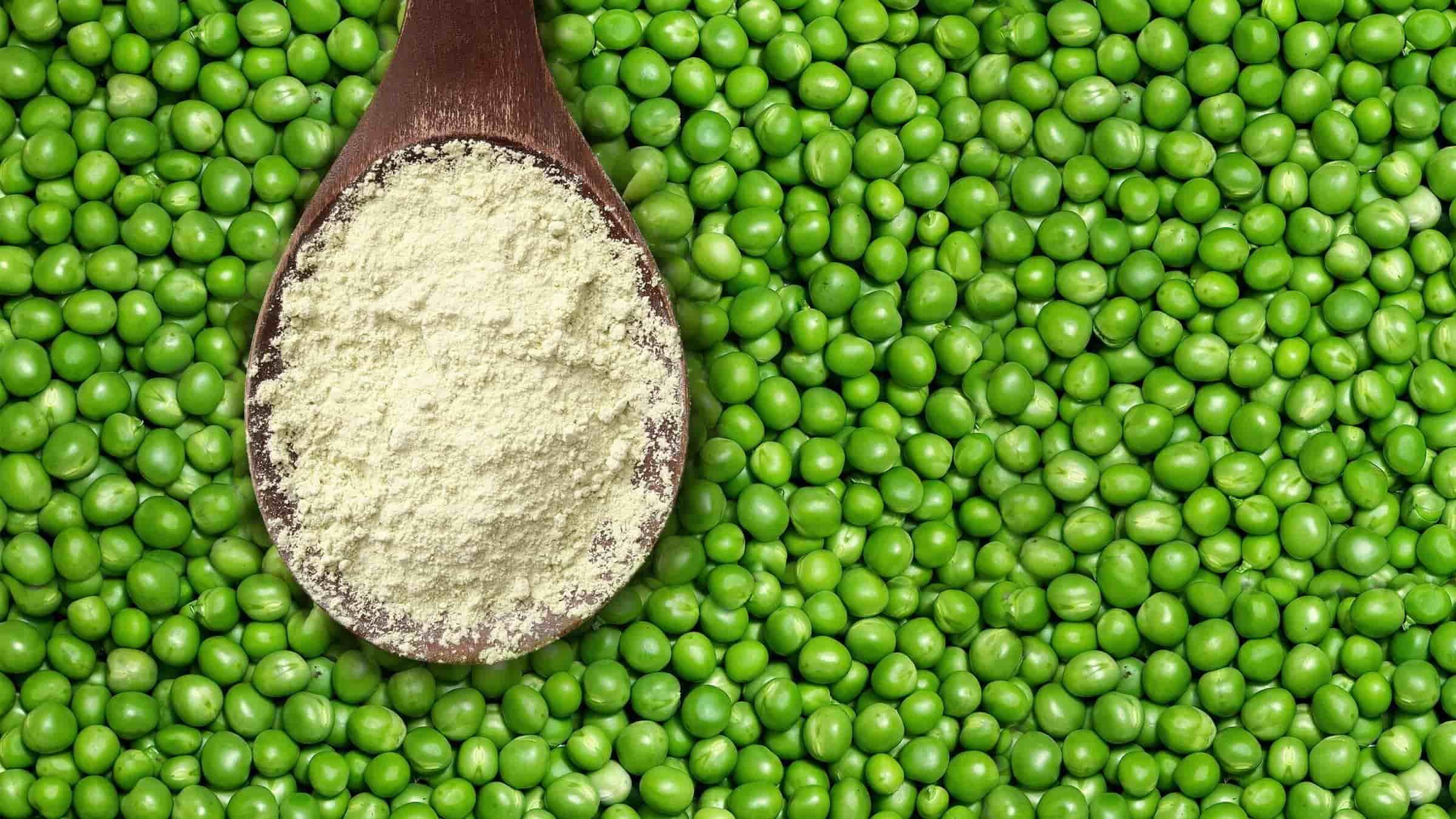 peas pea protein powder spoon