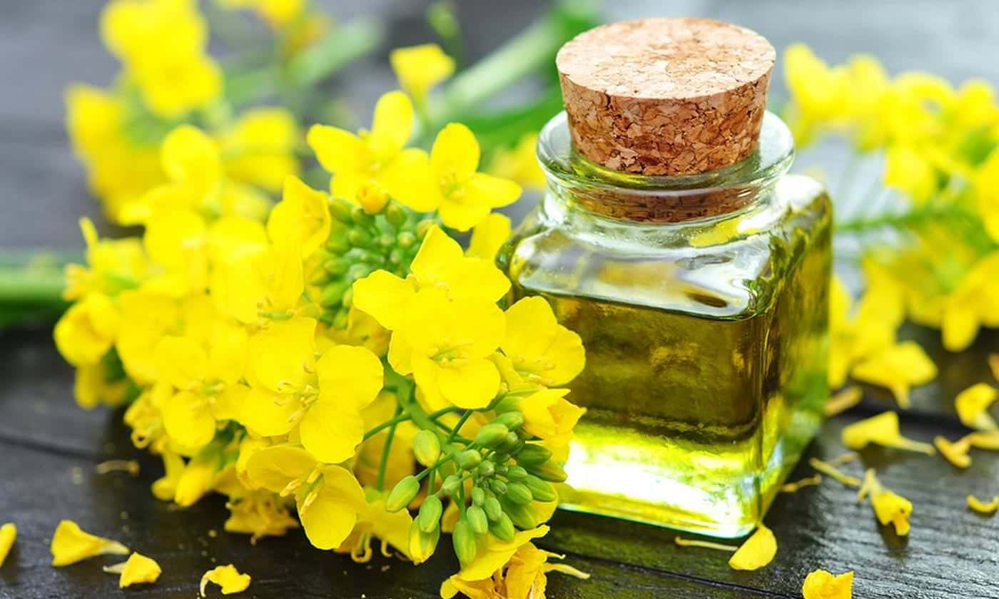 canola plant and oil