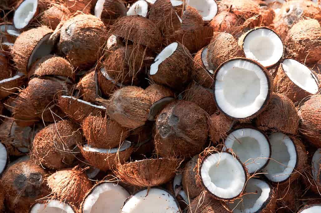 broken coconut shells