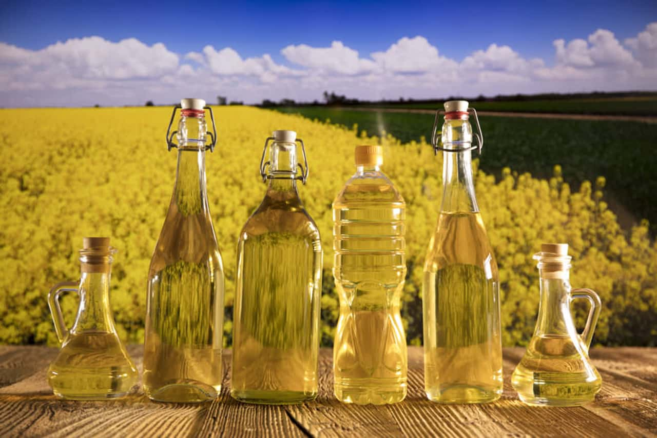 canola oil bottles and rapeseed plants