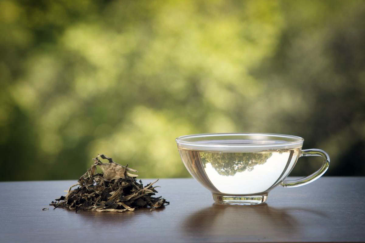clear white tea cup and herbs