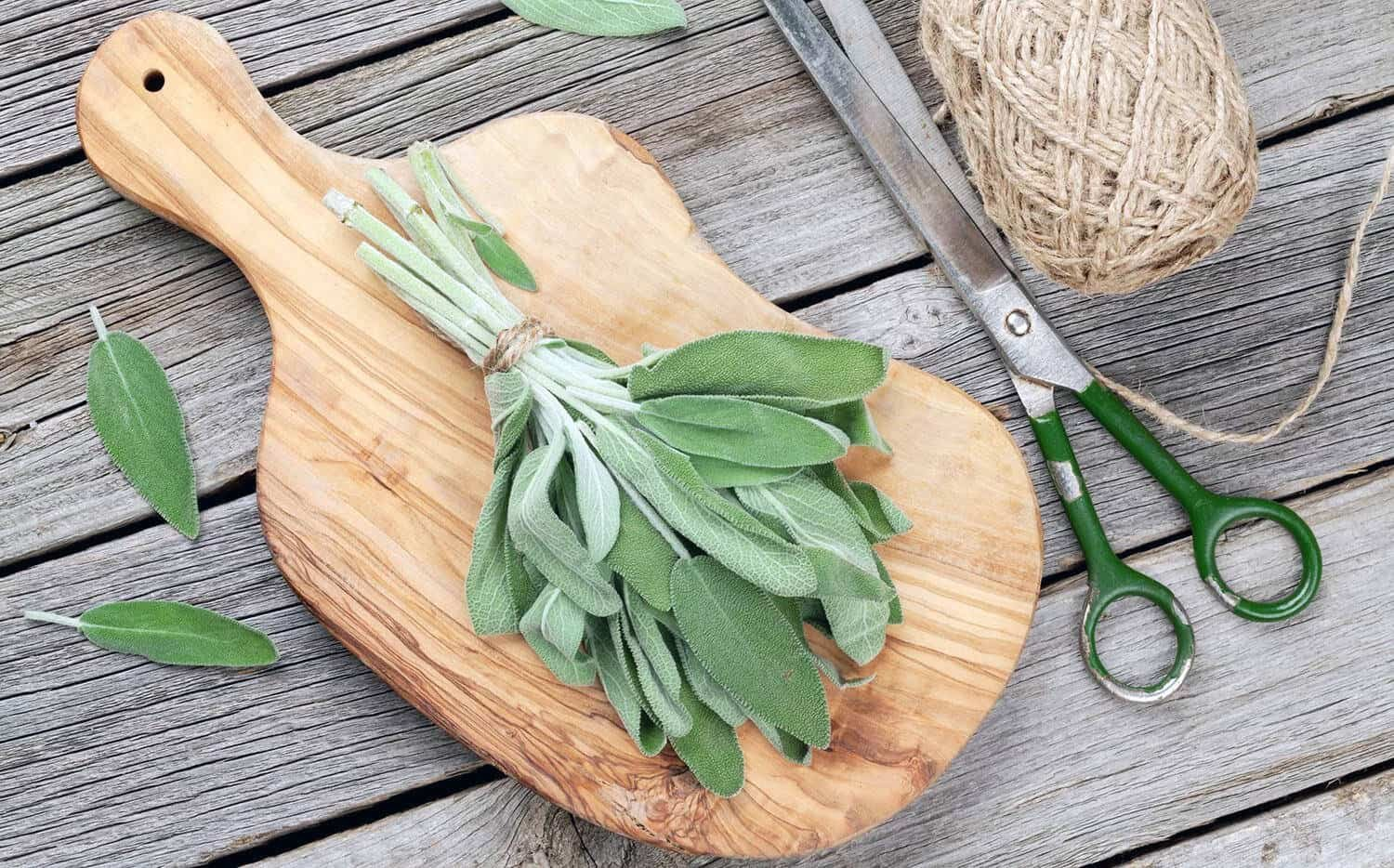 bundle of sage leaves on chopping board