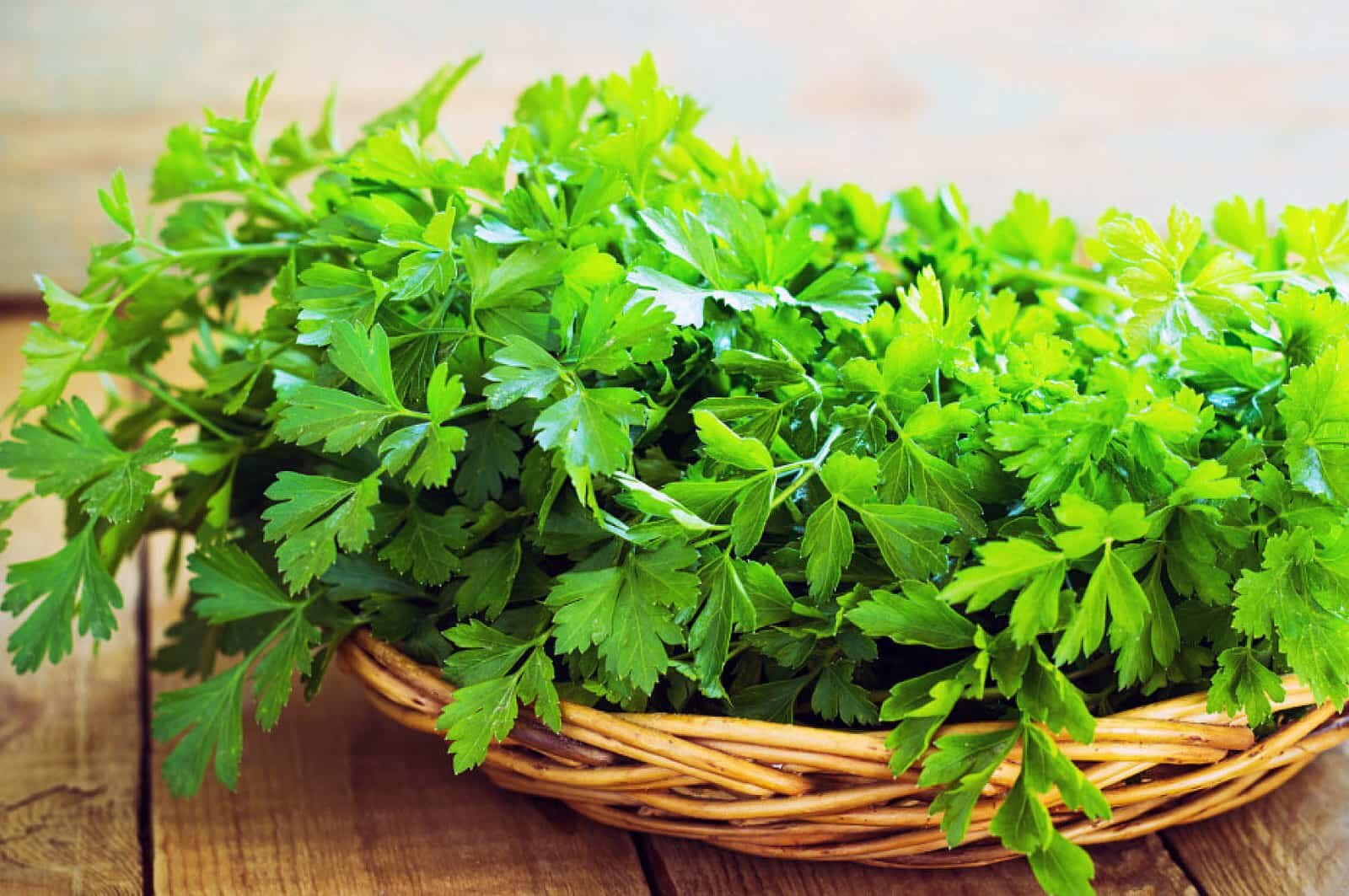 basket of parsley leaves